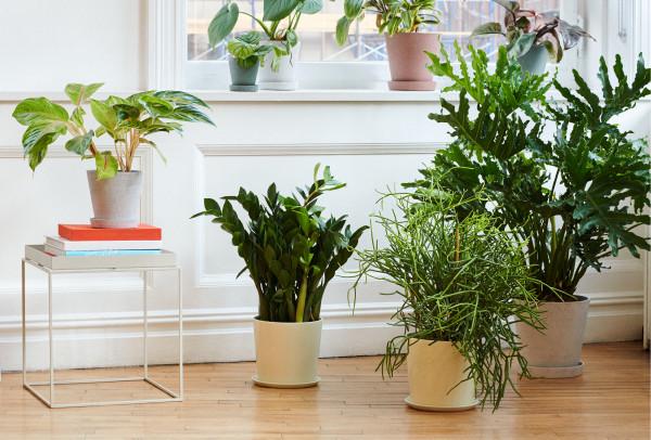 Botanical Family