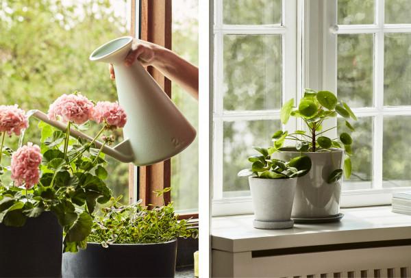 Pečujte o rostliny s HAY